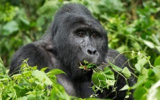 10 Days Uganda Wildlife and Primates Safari