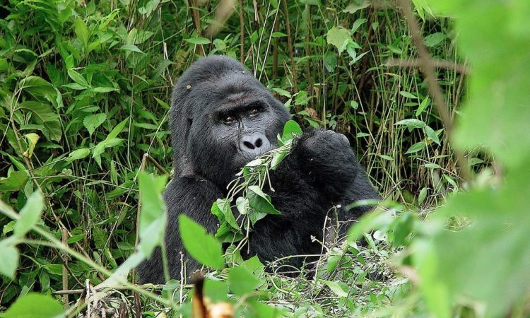 5 Days Bwindi Gorillas, Lake Mburo and Lake Bunyonyi Tour
