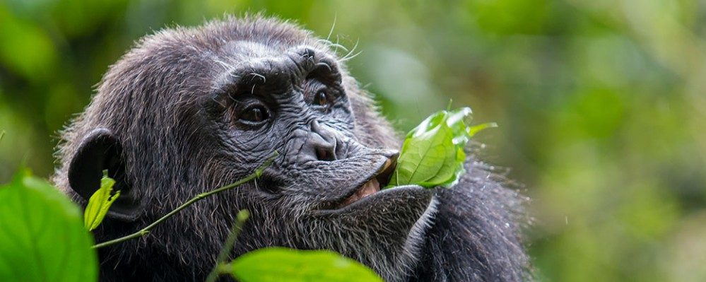 5 Days Kibale Chimpanzee and Semuliki National Park Safari