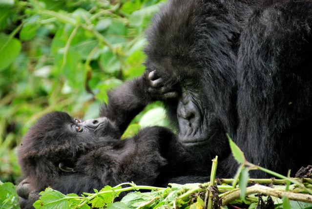 5 Days Lake Mburo and Bwindi Gorilla Trekking Safari