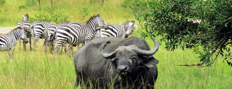 5 Days Lake Mburo Wildlife Safari