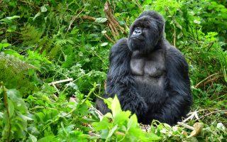 10 Days Uganda Tanzania Wildlife Safari