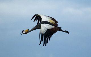 5 Days Queen Elizabeth Wildlife & Birding Tour