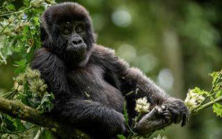 8 Days Uganda Adventure Safari
