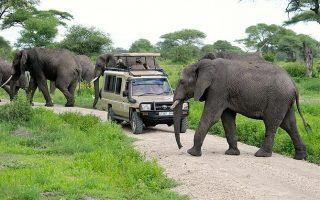 10 Days Best Uganda Rwanda Safari