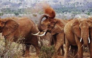 2 Days Tsavo East Wildlife Safari