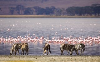 3 Days Lake Manyara Wildlife Safari
