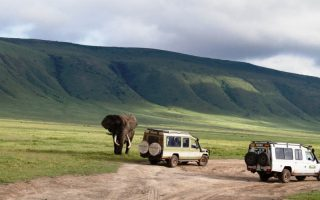 3 Days Serengeti National Park Tour