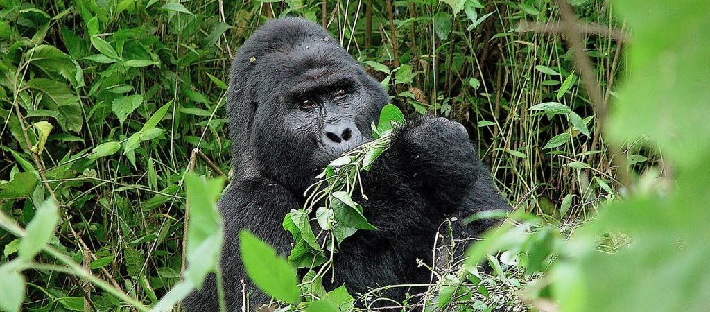4 Days Bwindi Gorillas & Lake Mburo Wildlife Safari