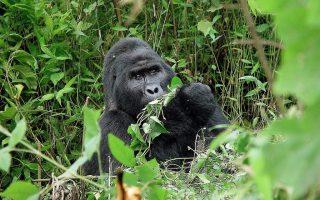 4 Days Bwindi Gorillas & Lake Mburo Wildlife Safari