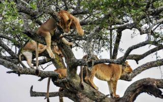 4 Days Lake Manyara & Serengeti Wildlife tour