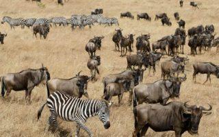 4 Days Masai Mara & Lake Nakuru safari