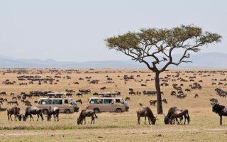 4 Days Masai Mara and Lake Elementaita Kenya safari