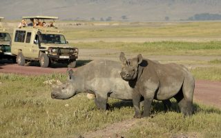 4 Days Ngorongoro & Serengeti Wildlife Safari