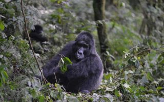 4 Days Uganda Gorilla Trekking & Mt Sabinyo Hike