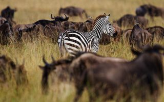 5 Days Serengeti & Ngorongoro Wildlife safari