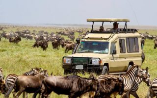 5 Days Serengeti Wildlife safari