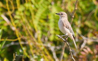 5 Days Uganda Birding Adventure