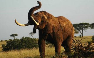 6 Days Tarangire, Serengeti, & Ngorongoro Crater safari