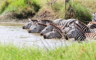 7 Days Serengeti & Tarangire Wildlife safari