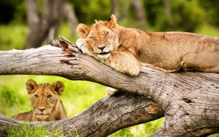 9 Days Tanzania Wildlife Safari