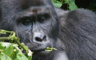 5 Days Rwanda Congo Gorilla Trekking Adventure