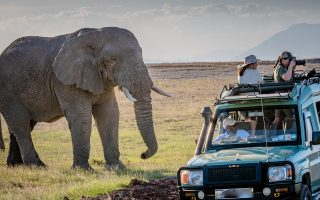 Wildlife Game Drives in Uganda